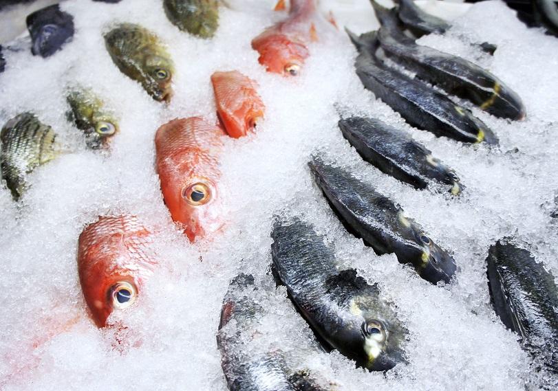 Đá vảy và đá tuyết bao phủ hải sản tôm cá tạo môi trường lạnh với độ ẩm thích hợp giúp hải sản giữ nguyên được chất lượng tươi mới.